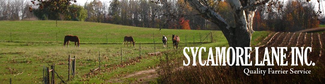 Sycamore Lane