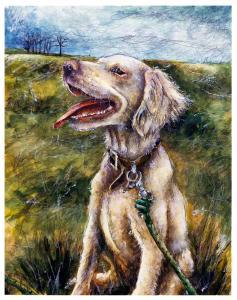 Dog_Izzy