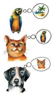 Parrot_Cat_Dog