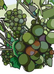 Grapes Color Outline
